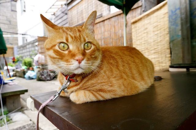 09_Cat1