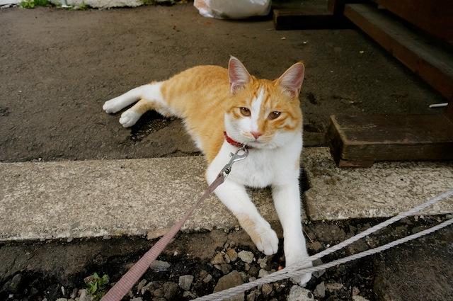 10_Cat2